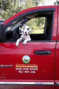 Simply Grazin' farm dog-Moo Louise