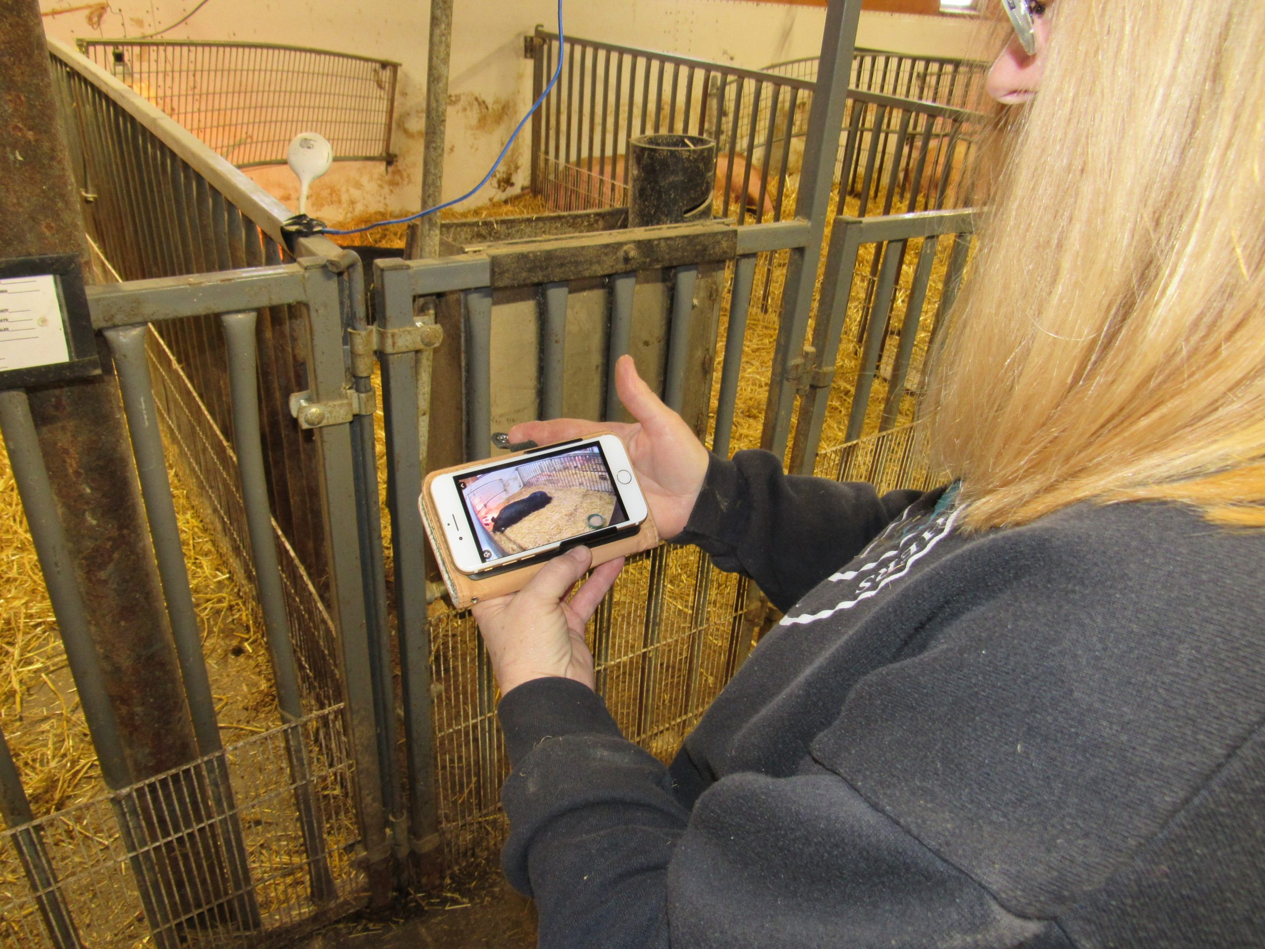 baby monitor in pig barn