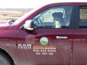 Simply Grazin' farm dog-Ringo