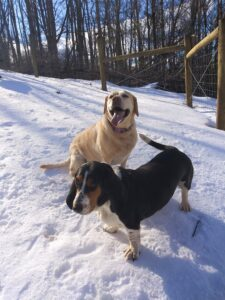 Simply Grazin' farm dogs- Lacie and Penny