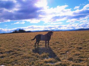 Simply Grazin' farm dog- Duke