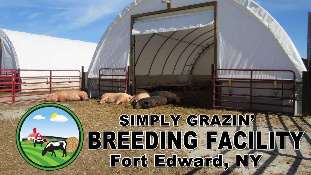 Simply Grazin' Swine Breeding Facility