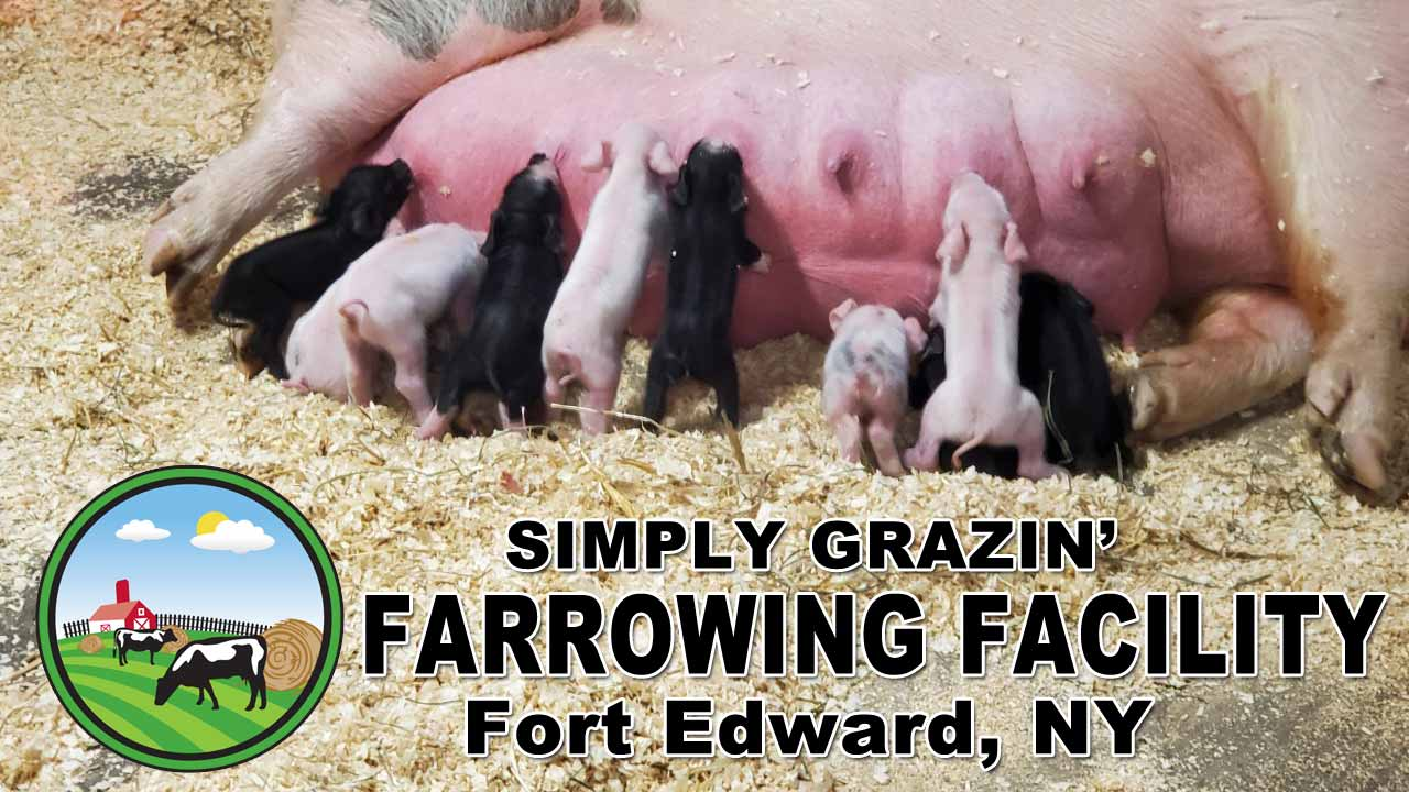 Simply Grazin' Farrowing Facility in Fort Edward, NY